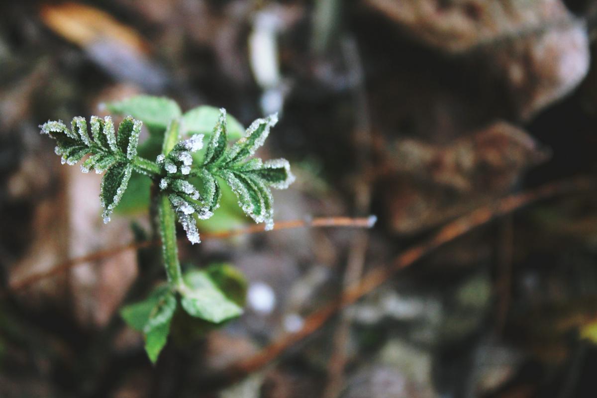 eletige-februar-hiszek-segits-hitetlensegemen